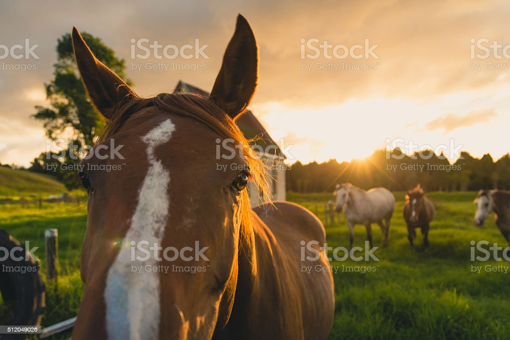 Horse looking at the camera stock photo