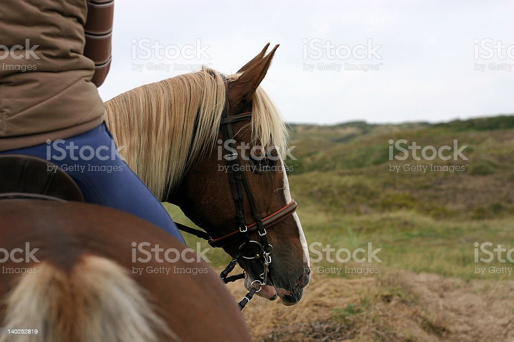 Horse looking back stock photo
