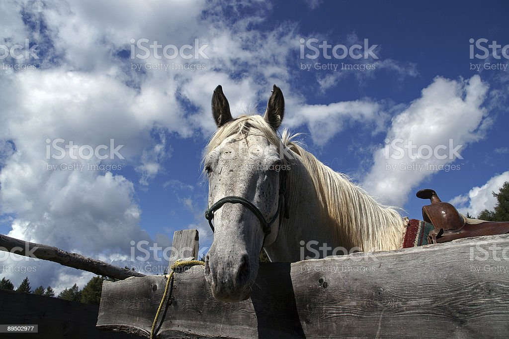 horse looking over hoarding 1 royalty-free stock photo