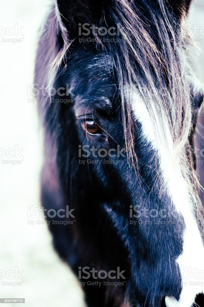 Horse, looking, thinking, living stock photo