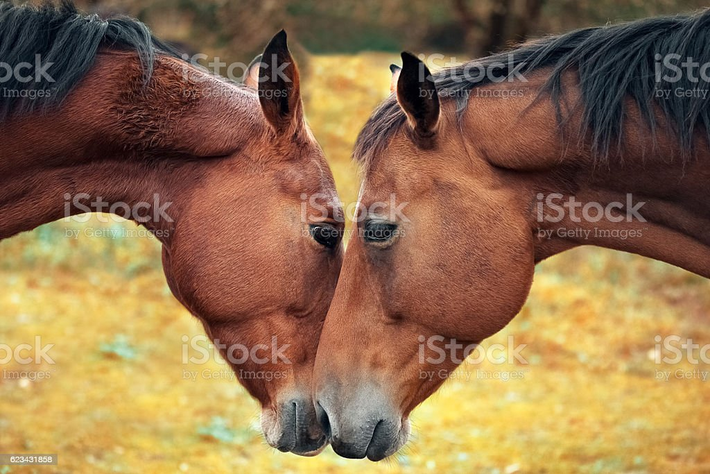Horse love and tenderness stock photo
