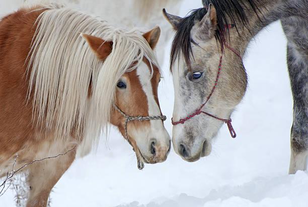 Horse love stock photo