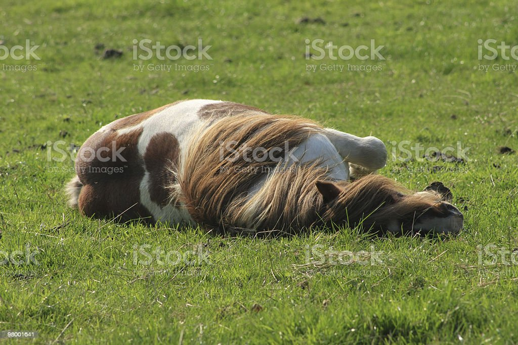Horse Lying Down royalty-free stock photo