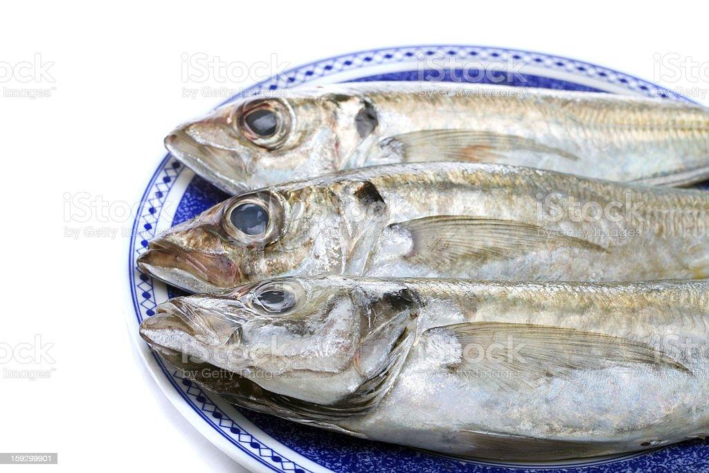 horse mackerel royalty-free stock photo