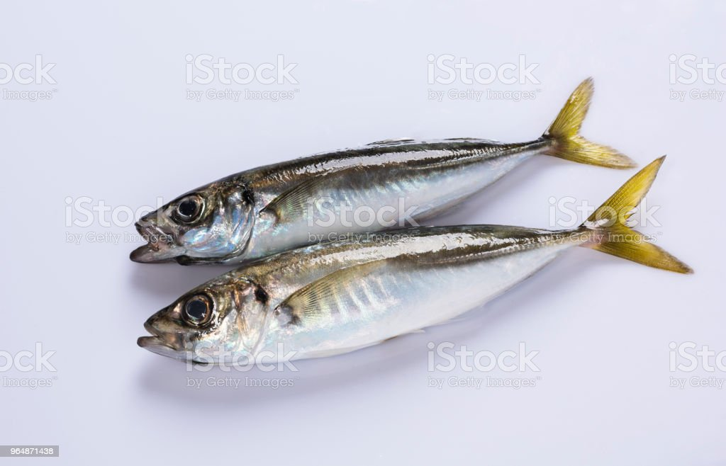 Horse mackerel royalty-free stock photo