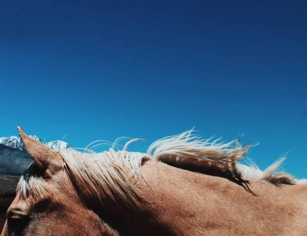 Horse Mane 1 stock photo