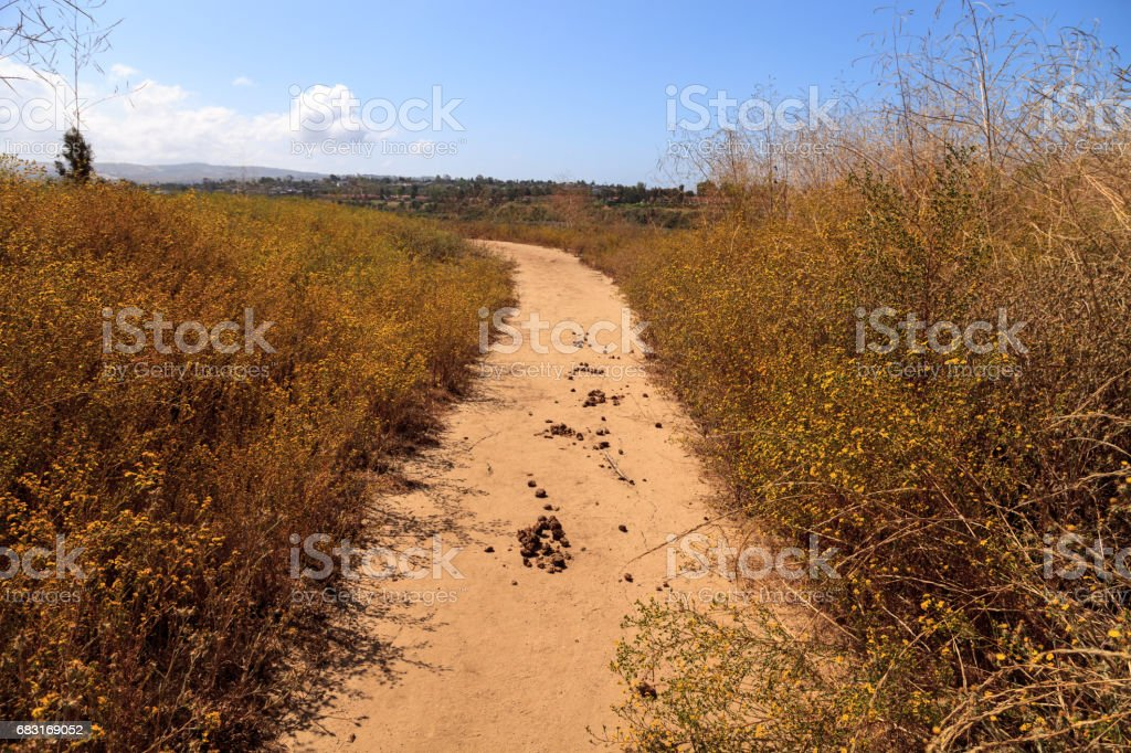 Horse manure along an Upper Newport Bay Nature Preserve hiking trail 免版稅 stock photo