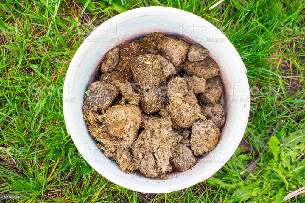 Horse manure in a white bucket stock photo