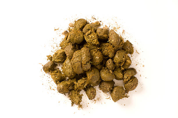 Horse Manure  poop stock pictures, royalty-free photos & images