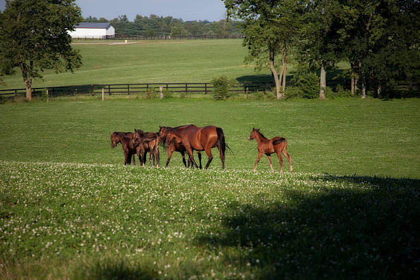 Horse Mothers and Babies stock photo