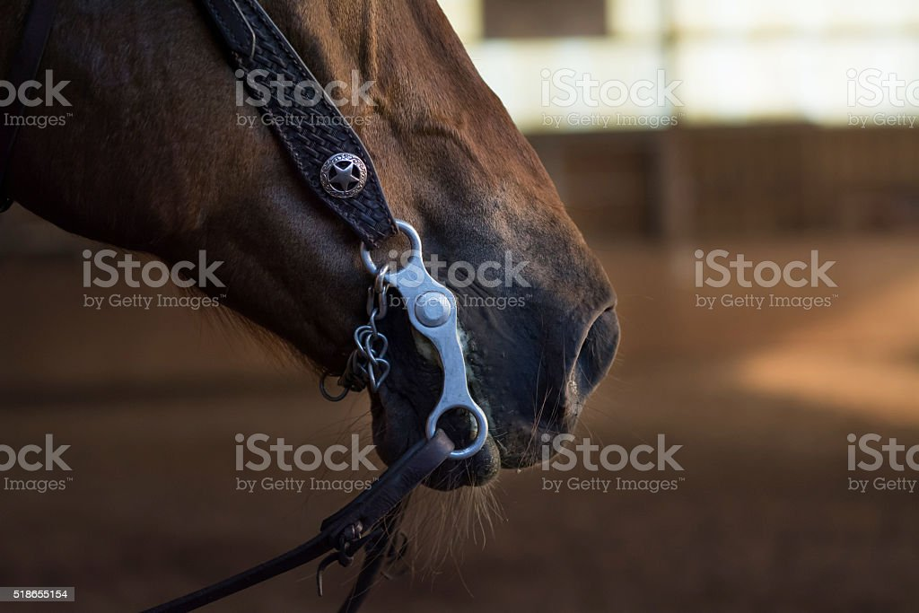 horse mouth with a curb bit, western riding, closeup stock photo