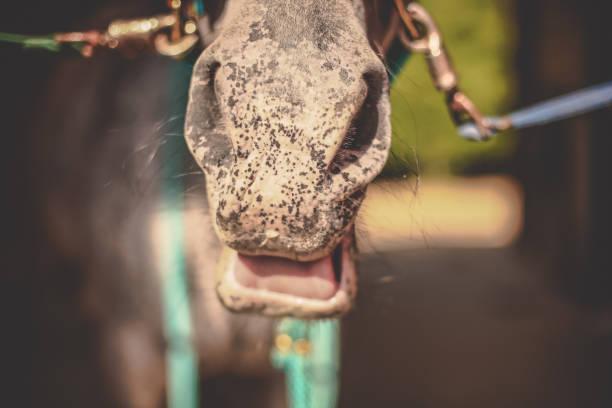 Pferd namens Pepsi – Foto