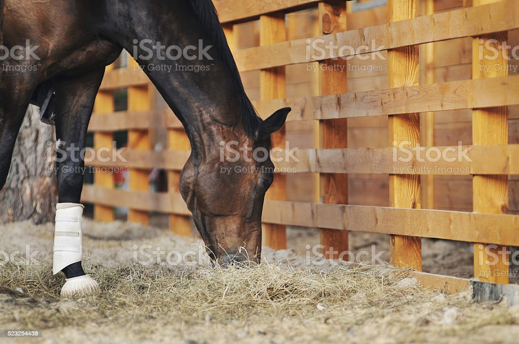 Horse near stable stock photo
