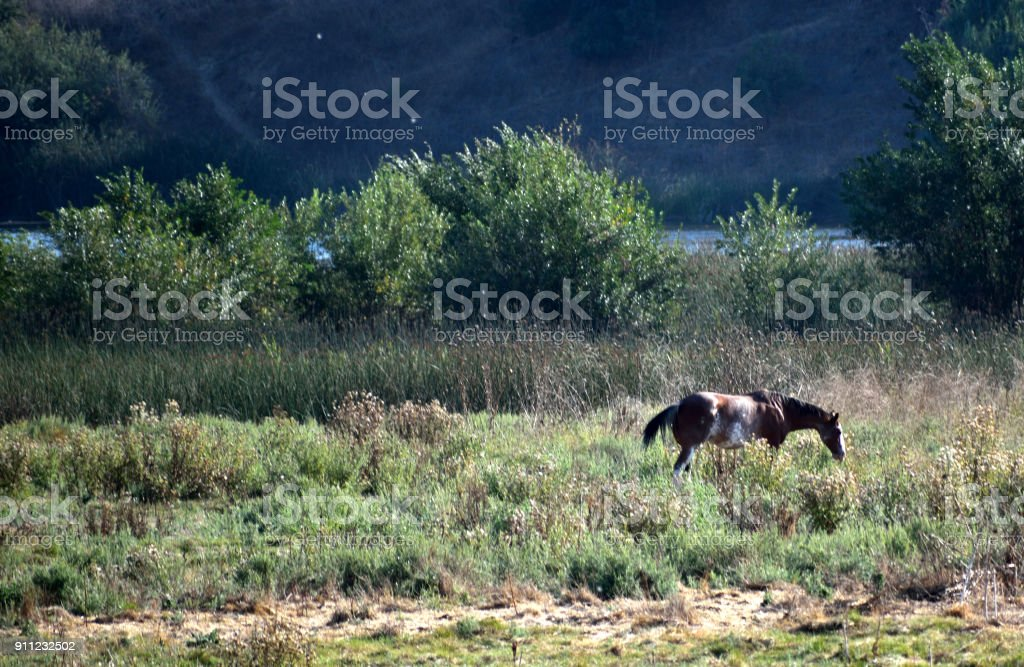 A Horse Near the Watering Hole stock photo