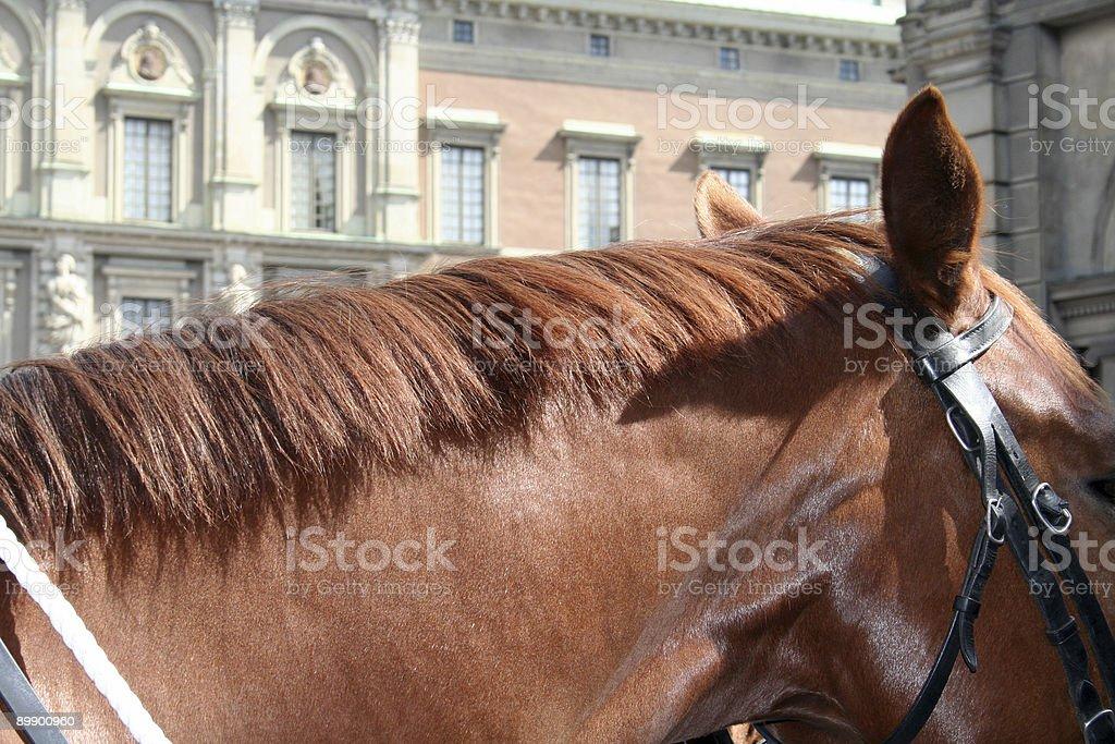 horse neck royalty-free stock photo