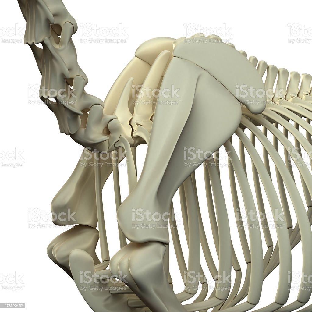 Fotografía de Horse Cuelloescápulacaballo Equus Anatomía y más banco ...