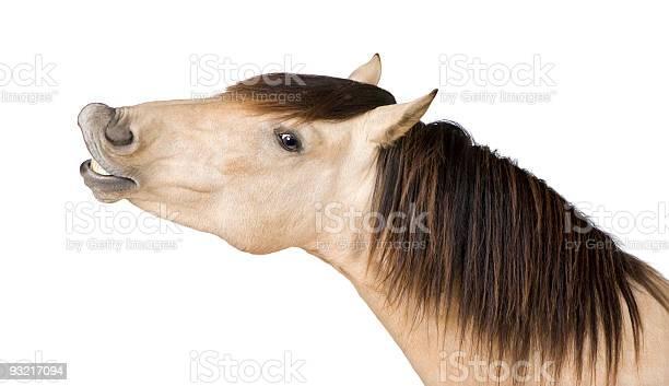 Horse neighing picture id93217094?b=1&k=6&m=93217094&s=612x612&h=dchekil0cmen7n6mftzfcinqars q48fesqiryctila=
