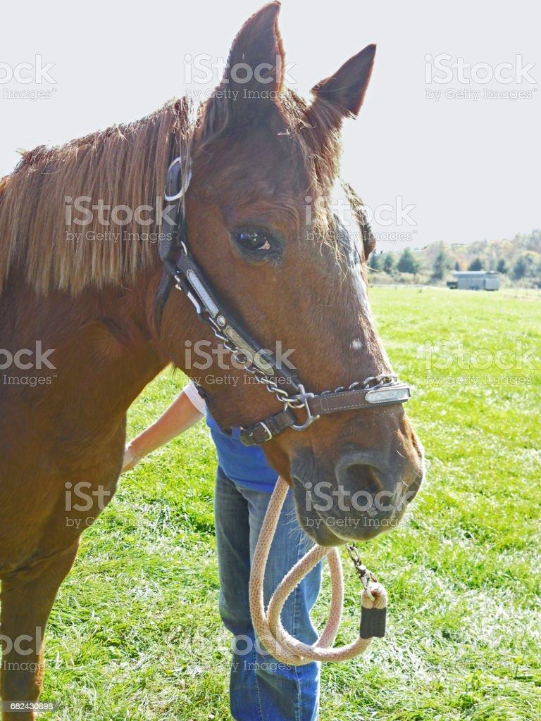 Horse new york autumn royalty-free stock photo
