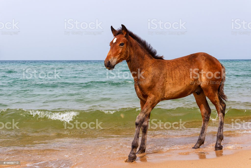 horse next to water stock photo
