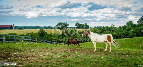 Beautiful overo horse on a pasture in a farm in Central Kentucky
