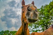 Picture shows a horse on a field in a cloudy weather.