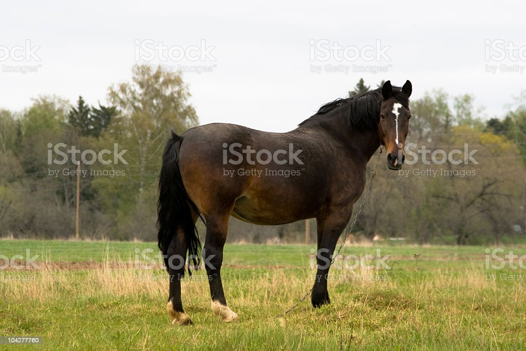 Horse on a field. royalty-free stock photo