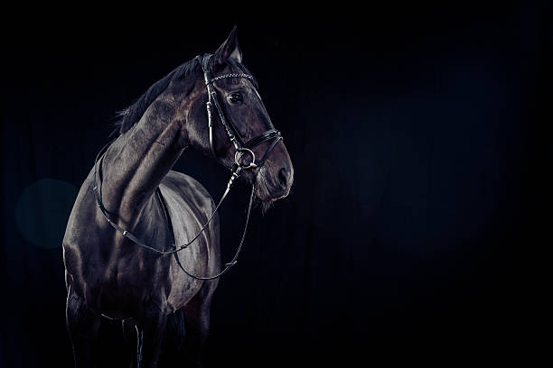 Konia na czarnym tle – zdjęcie