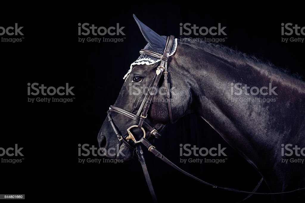 Cheval sur fond noir - Photo