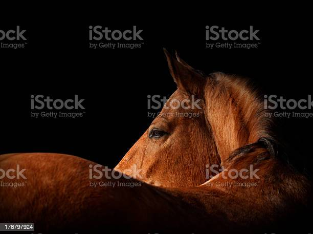 Horse on black picture id178797924?b=1&k=6&m=178797924&s=612x612&h=yzpzrzkgpib0eszgnbhddycbck6bvczftwqj5anfmx0=