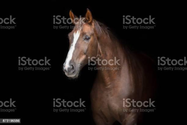 Horse on black picture id873196586?b=1&k=6&m=873196586&s=612x612&h=mv13uhlea0ymmdbt6m2n7pedlpmtvoqj xug iz40ik=