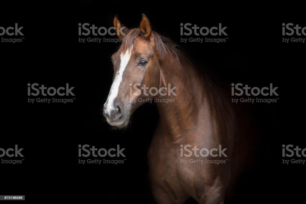Horse on black stock photo