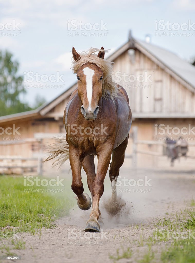 horse on farm stock photo