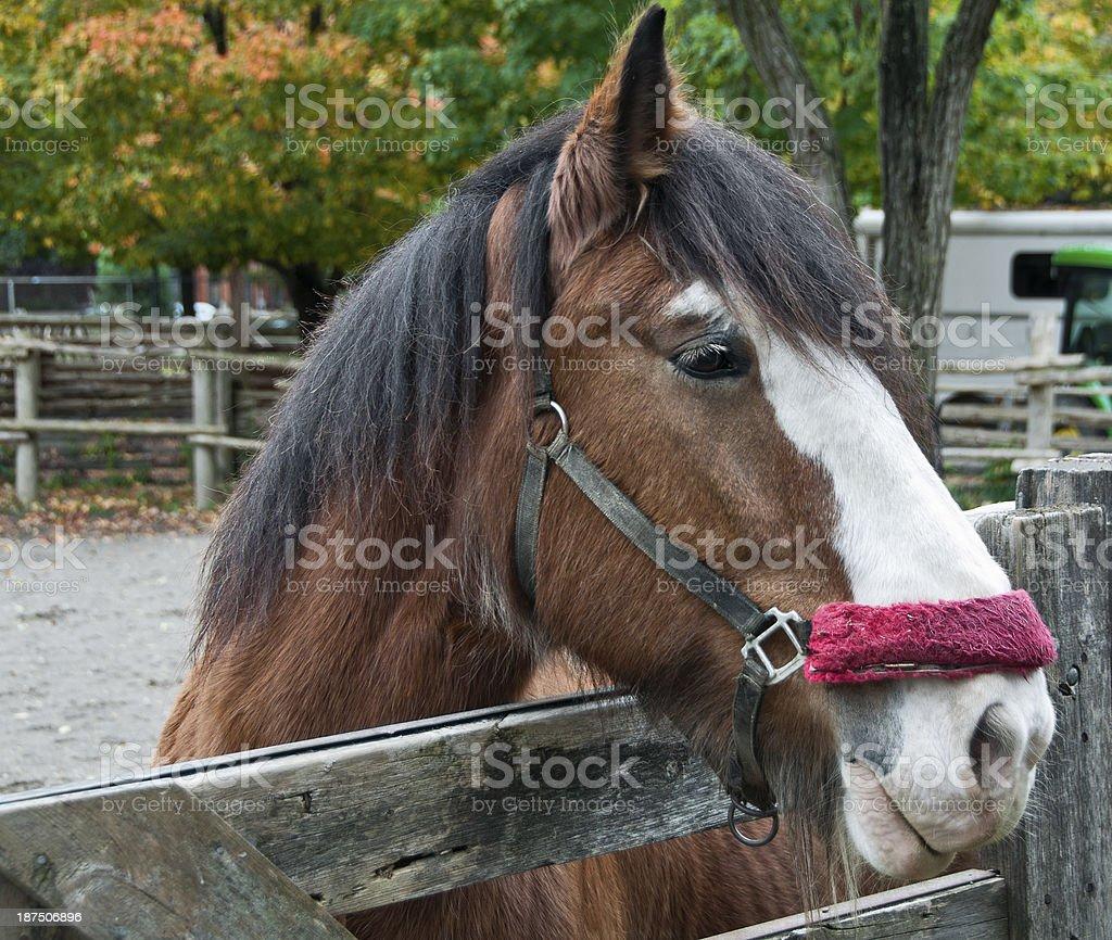 Horse on farm royalty-free stock photo