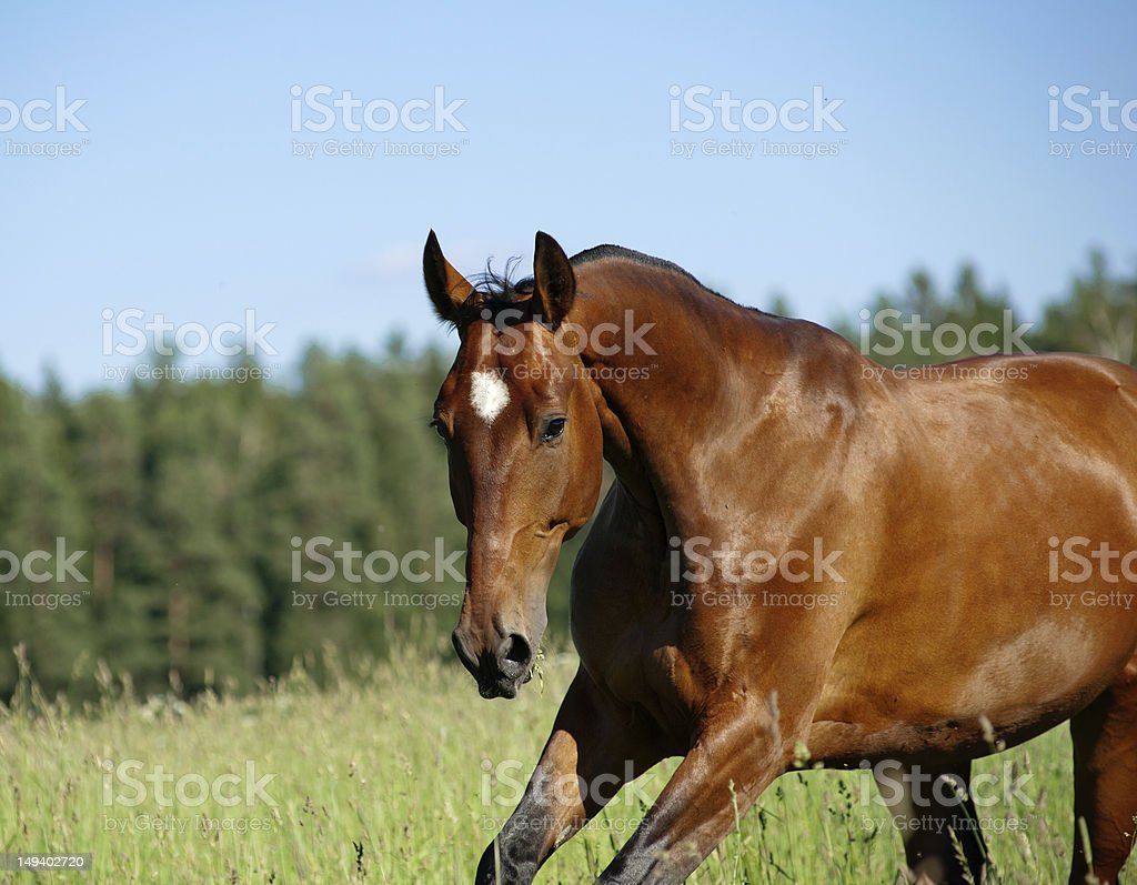 horse on freedom stock photo