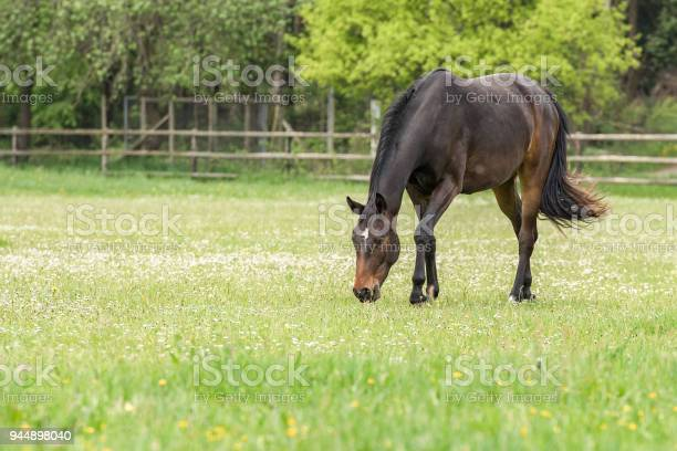 Photo of horse on fresh grassground