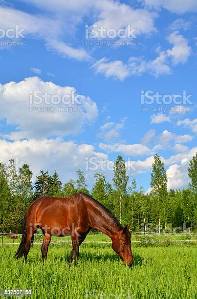 Horse on green meadow picture id537507158?b=1&k=6&m=537507158&s=612x612&h=lv l7rxqe 2zikrs4uvywcispkbtkougyhyjguypm2o=