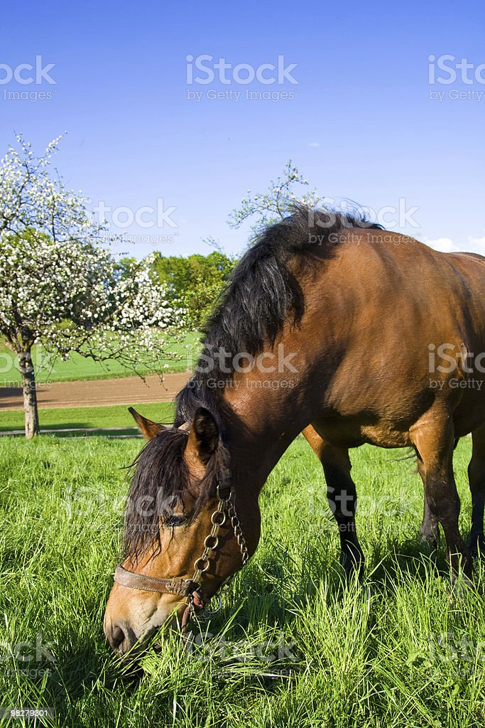 Horse on meadow royalty-free stock photo