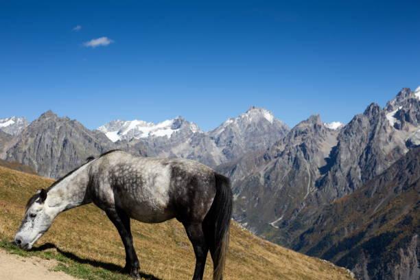 Pferd auf der Weide in den Bergen – Foto