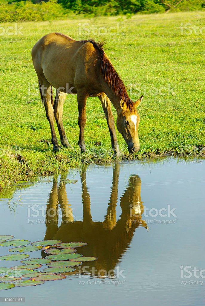 horse on pasture royalty-free stock photo