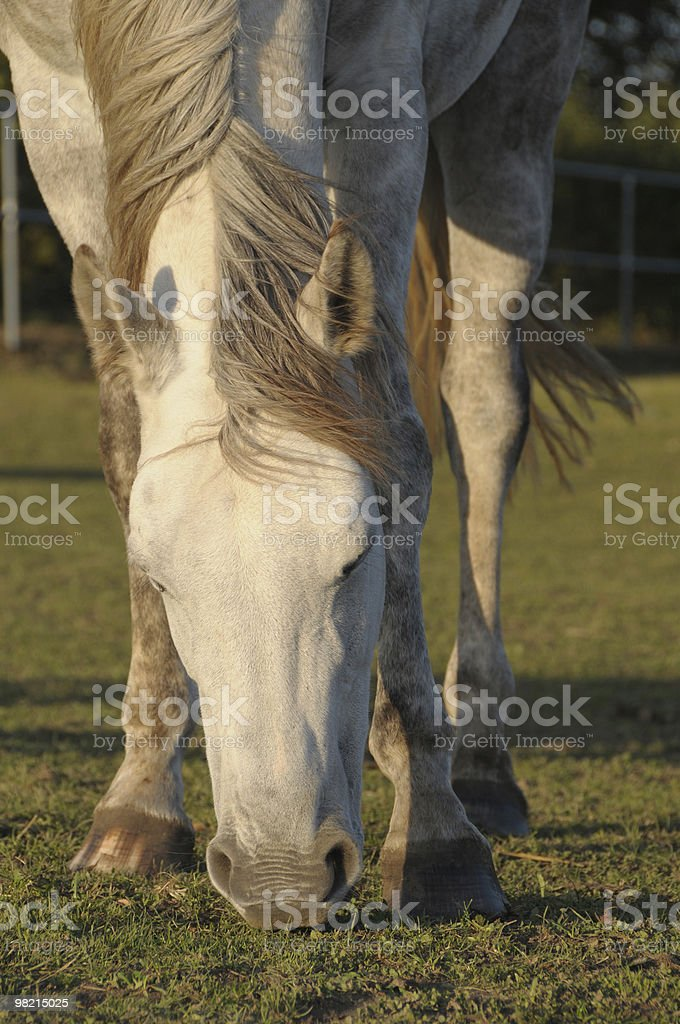 horse on the grass royalty-free stock photo