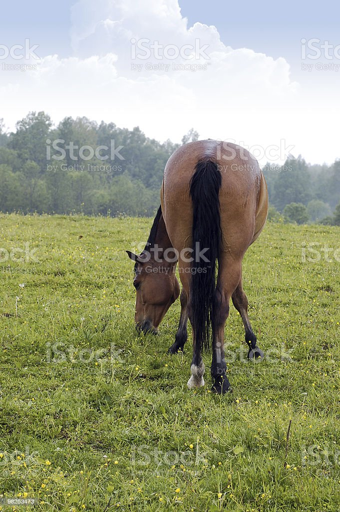 Horse on the meadow royalty-free stock photo