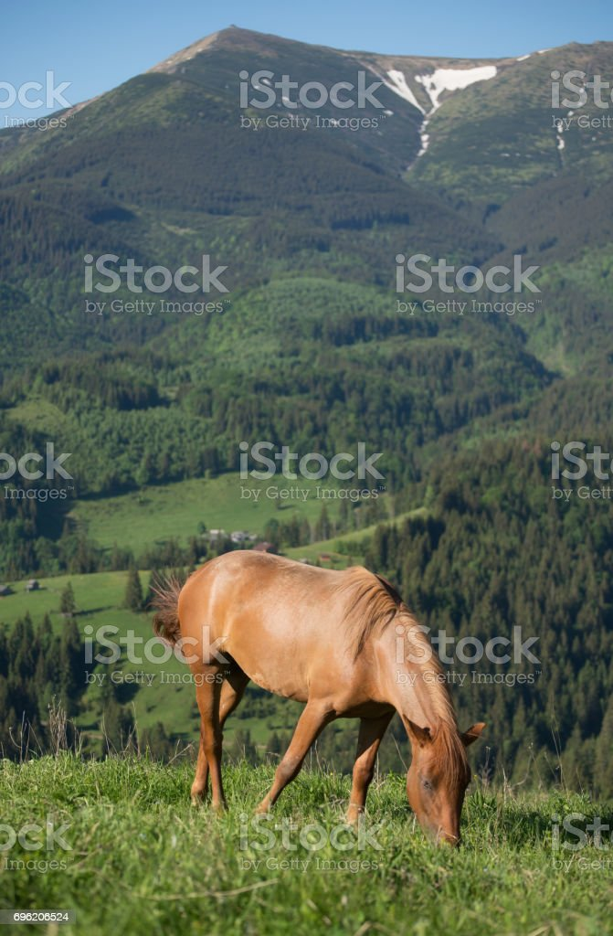 Horse On The Mountain Field Beautiful Natural Landscape With