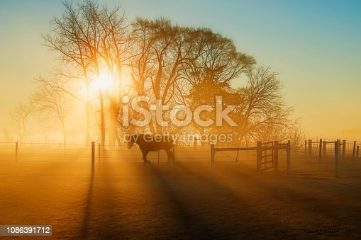 Horse on the Move at Dawn in Fog