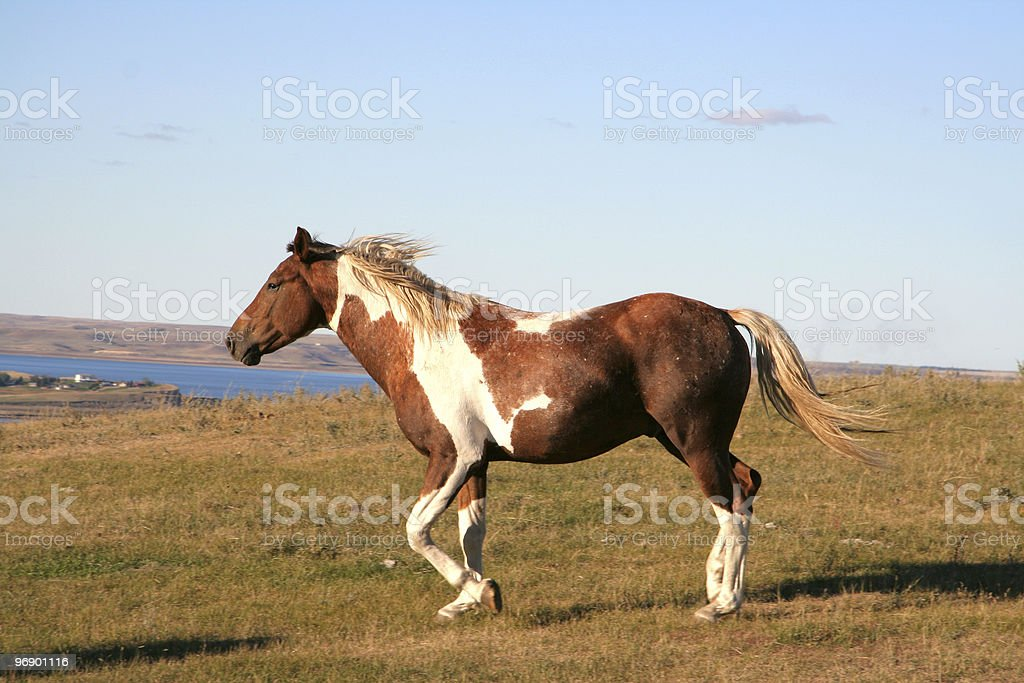 Horse on the Move royalty-free stock photo