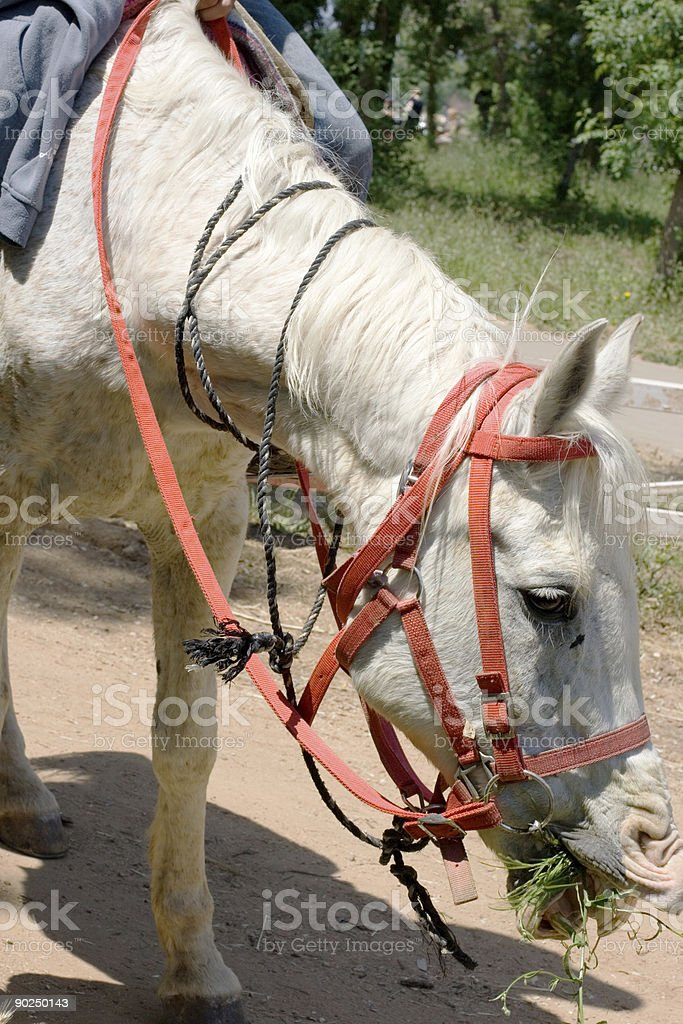 Horse on the road royalty-free stock photo