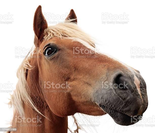 Horse on white background picture id174953169?b=1&k=6&m=174953169&s=612x612&h=cejwh3zr2vzn gckx93iiqxoowegw10g1n7p3dqcrmk=