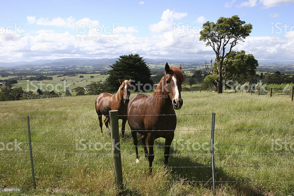horse pasture royalty-free stock photo