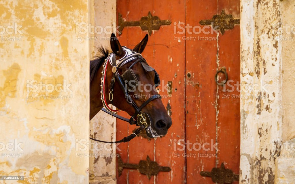 Horse peaks head out from behind a wall framed by a red door stock photo