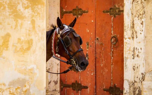 pferd gipfel begeben sie sich hinter einer wand, umrahmt von einem roten tür - scheuklappe stock-fotos und bilder