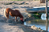 the pony drinks water from the lakehorse on the catwalk